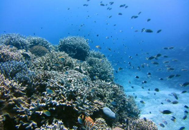 【沖縄・瀬底島・体験ダイビング】じっくり40分潜れる!瀬底島・1ビーチ体験ダイビング