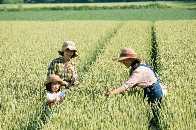 【北海道・帯広・農業体験】ランチ付き!生活に欠かせない小麦の生態に迫る