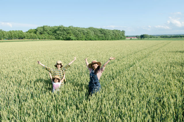 【北海道・帯広・農業体験】おやつ付き!生活に欠かせない小麦の生態に迫る