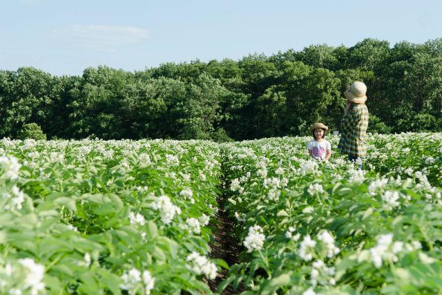 【北海道・農業体験】おやつ付き!北海道名産、じゃがいもを知る