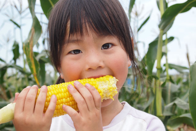 【北海道・農業体験】おやつ付き!トウモロコシ本来の甘さをそのまま味わう