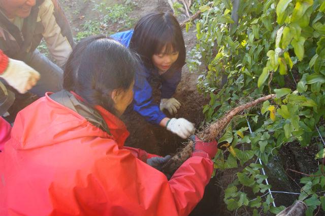 【北海道・帯広・農業体験】おやつ付き!掘り上げた長さにビックリ、長いも収穫体験