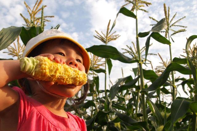 【北海道・農業体験】ランチ付き!こだわり農家で食す、もぎたてトウモロコシ