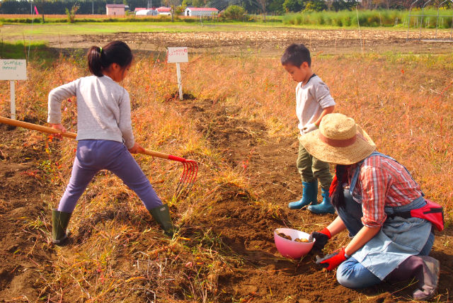 【北海道・帯広・農業体験】手ぶら農業体験!じゃがいも掘り(50分)