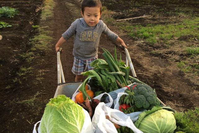 【千葉・木更津市・農業体験】季節の野菜を収穫!「食」の大切さを学べる農業体験