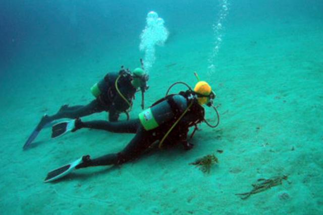 【高知県柏島・ファンダイビング】経験者向け!カラフルな魚たちと泳ぐ2ダイブプラン