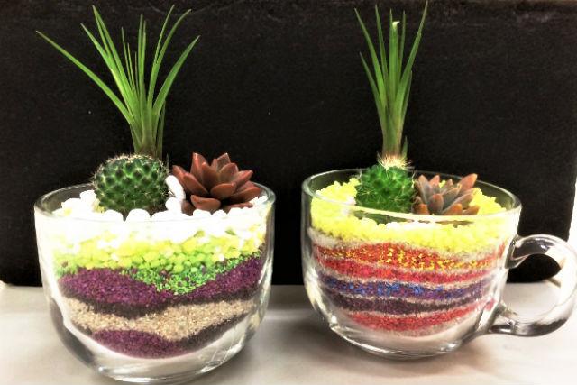 【新宿・寄せ植え】3~4つの多肉植物が選べる!グラスガーデニング&カラーサンドアート創作体験