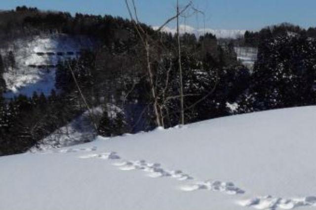 【新潟・南魚沼・スノーシュー】冬の里山を観察できる!スノーシューウォーキング