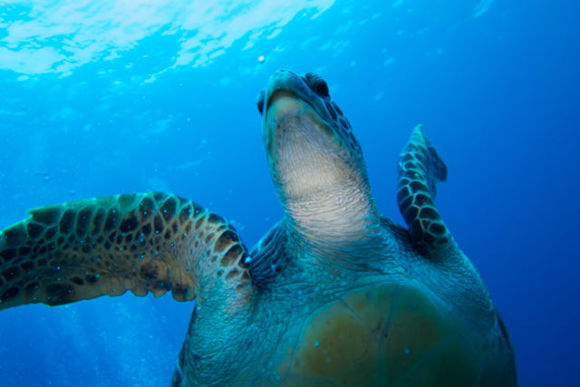 【慶良間・体験ダイビング】初心者歓迎!透明度抜群のアカ島。離島deダイビング(1ダイブ)