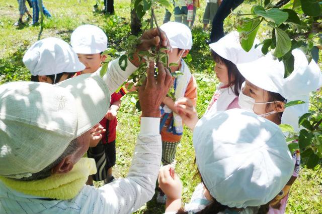 【青森・農業体験】気分はりんご農家!りんごの花摘み体験をしよう