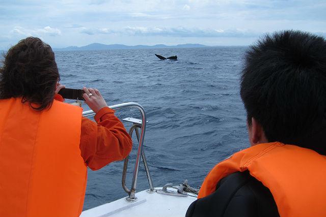 【沖縄・ホエールウォッチング&リバートレッキング】海と山、両方楽しむわがままプラン!