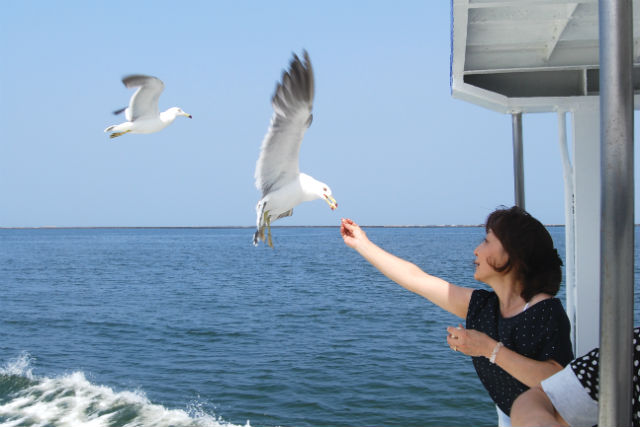 【小樽・クルージング】家族連れに好評の港湾内コース。爽やかな海景を満喫しよう