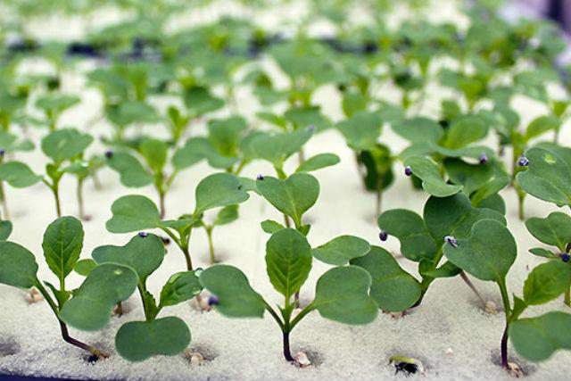【伊勢志摩・農業体験】土いらずで安心・安全!水耕栽培の種付け&収穫体験プラン