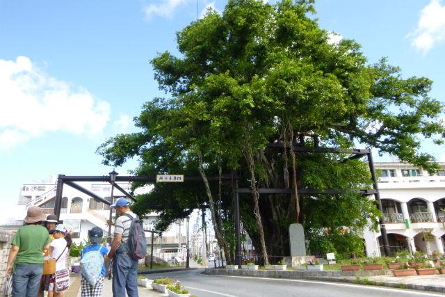 【沖縄・名護市・ガイドツアー 】懐かしの町並みをのんびり散歩。「名護まちなか」コース