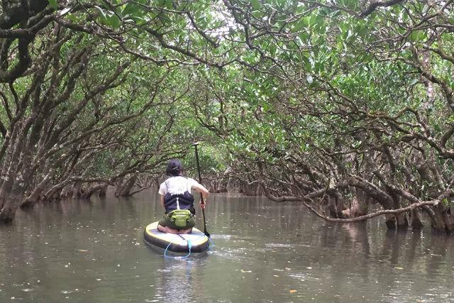 【奄美大島・SUP】国定公園特別保護地域へ!マングローブ林で冒険SUPツアー