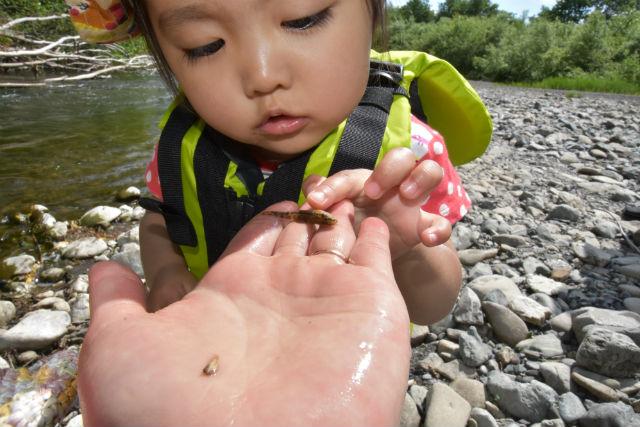 【北海道・占冠村・川下り】2歳から参加可能!占冠村で川下りを楽しもう