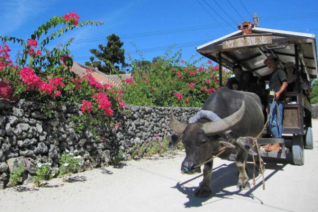 【沖縄・竹富島・レンタサイクル】竹富島を自分のペースで観光!レンタサイクル&水牛車プラン