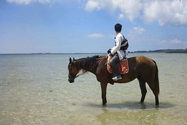 【沖縄・宮城島・乗馬体験】たっぷり浜辺をお散歩しよう!ビーチ乗馬・90分