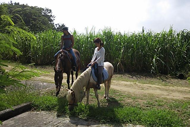 【沖縄・宮城島・乗馬体験】乗馬で海と森を満喫!ビーチと林トレッキング・90分