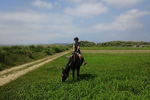 【沖縄・宮城島・乗馬体験】昔なつかしい道を乗馬散歩。林トレッキング&農道コース・90分