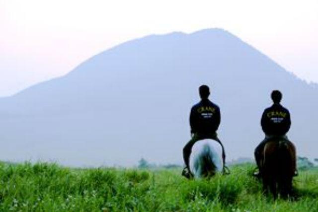 【奈良・天理市・乗馬体験】乗馬デビューを応援します!初心者向け体験プラン(にんじん持参コース)