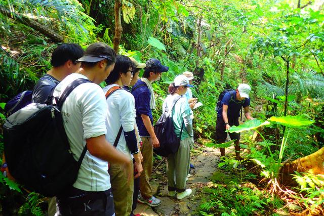 【西表島・トレッキング】滝の迫力に感動!亜熱帯の森を楽しむトレッキングツアー!