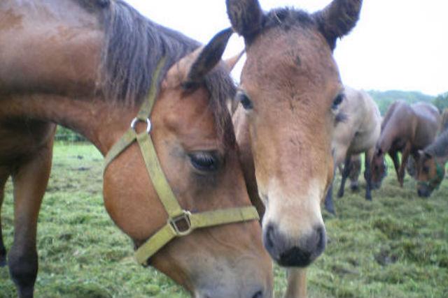 【北海道・北広島市・乗馬体験】馬に乗って場内をぐるりと2周!引き馬体験