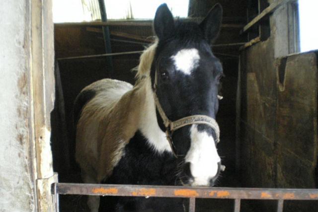 【北海道・北広島市・乗馬体験】札幌から近い牧場で、体験乗馬を楽しもう!