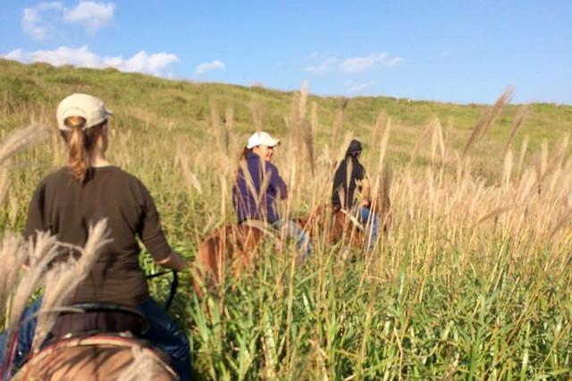 【熊本・阿蘇・乗馬】丘の上からの眺望を楽しむ!乗馬体験ウエスタンコース