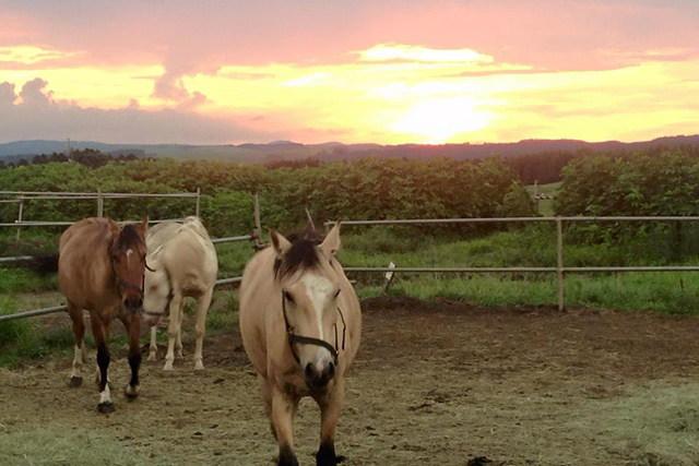 【 熊本・阿蘇・乗馬】アップダウンにドキドキ!乗馬体験ワイルドウエストコース