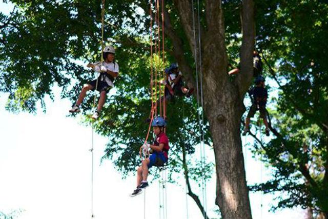 【鳥取・ツリーイング】大自然の中のスリリング体験!ロープとハーネスで安全に登ろう