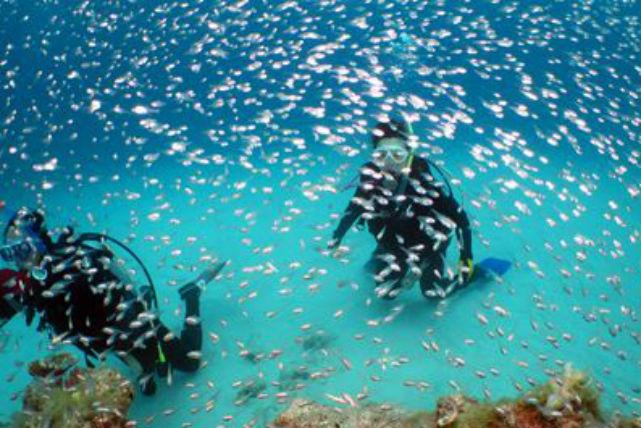 【沖縄・水納島・ファンダイビング】海の透明度に感動!水納島・3ボートダイビング