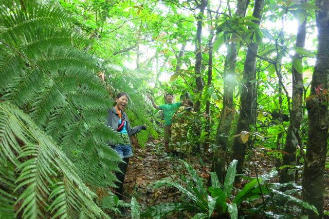 【西表島・クルージング】沖縄県最大の川、浦内川へ!ジャングル探検・半日ツアー!