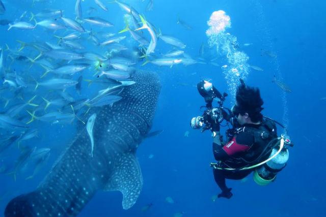 【沖縄・瀬底島・体験ダイビング】その巨大さに感動!餌づけも見られる、ジンベエザメダイビング