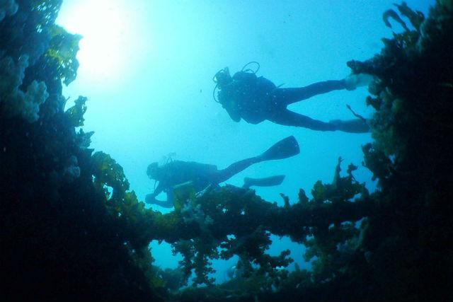 【長崎・九十九島・ファンダイビング】西海国立公園、九十九島エリアに潜るダイビング
