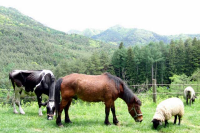 【山梨・河口湖・牧場体験】牛さんとのふれあいを満喫!乳しぼり・バター作り体験