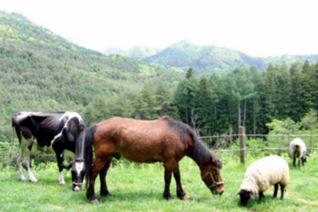 【山梨・河口湖・乗馬体験】親子2人乗りもOK!自然豊かな牧場で乗馬を楽しもう!