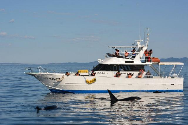 【知床・羅臼・クジラ&イルカウォッチング】大迫力の船旅!海の野生動物と出会うクルージングツアー