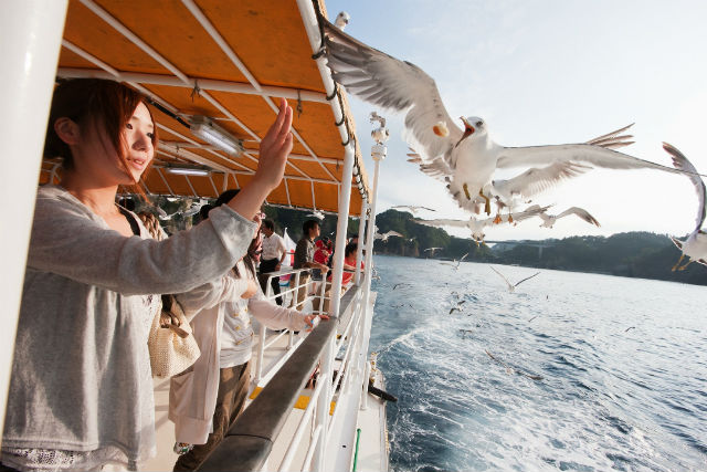 【岩手・宮古市・クルージング】浄土ヶ浜周遊ツアー!うみねこの餌づけも楽しめます