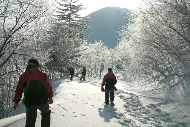 【北海道・然別湖・スノーシュー】雪つもる森林をお散歩。スノートレッキングプラン