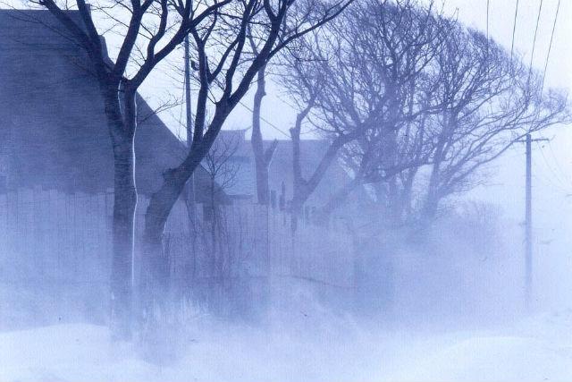 【青森・地吹雪体験ツアー】雪国ならではの自然現象を体感!地吹雪の雪原を歩こう