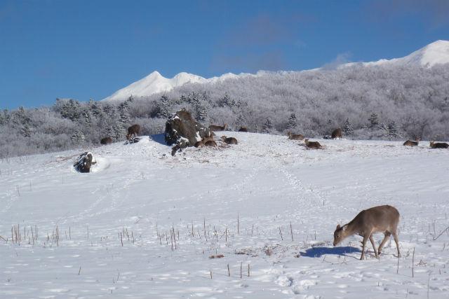 【北海道・知床・スノートレッキング】スノーシューでフレペの滝へ!初級プラン