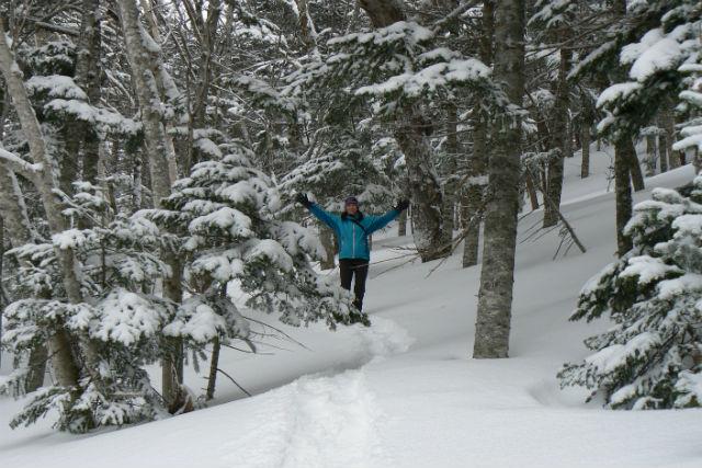 【北海道・知床・スノートレッキング】雪景色に染まった原生林を歩こう!中級プラン