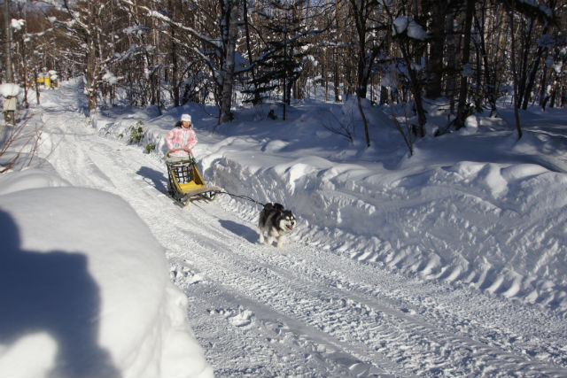 【札幌・犬ぞり・スノーモービル・バナナボート】癒しと絶叫の雪遊び!冬ならではのアクティビティセット
