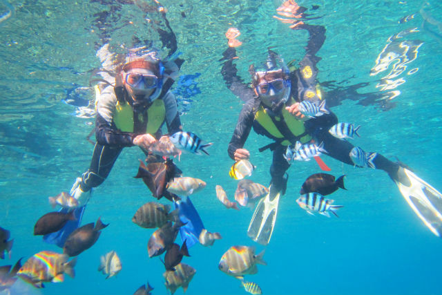 【沖縄・読谷村・スノーケリング】沖縄をエンジョイ!青の洞窟スノーケリング&餌付け体験ダイビング