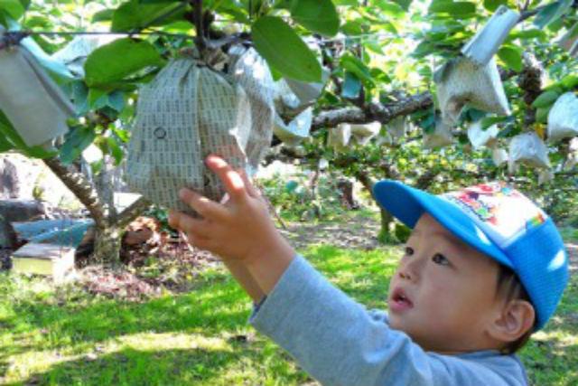 【長崎・梨狩り】おいげん梨はうまかばい!こだわりの10種を食べつくす贅沢体験!