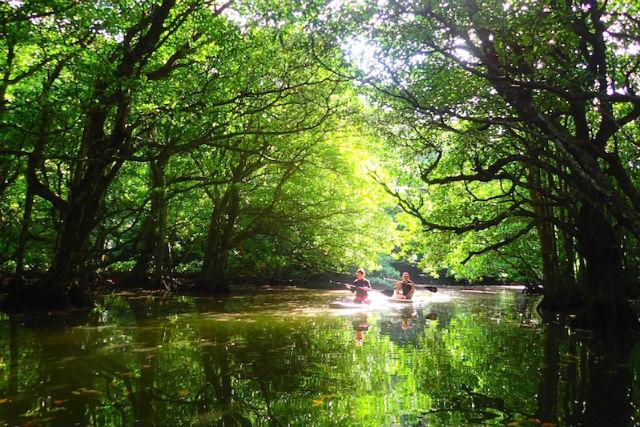 【西表島・SUP・半日】大自然に囲まれ非日常なひととき。マングローブSUP