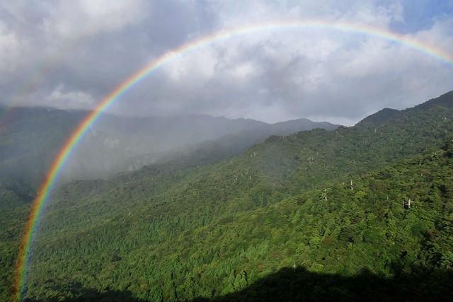 【屋久島・登山ツアー・日帰り】これぞ屋久島!白谷雲水峡の絶景を見に行こう