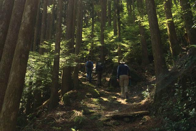 【和歌山・トレッキング】いざ、世界遺産・熊野古道へ!古道歩き・バスコース(紀伊勝浦駅発・2日間)
