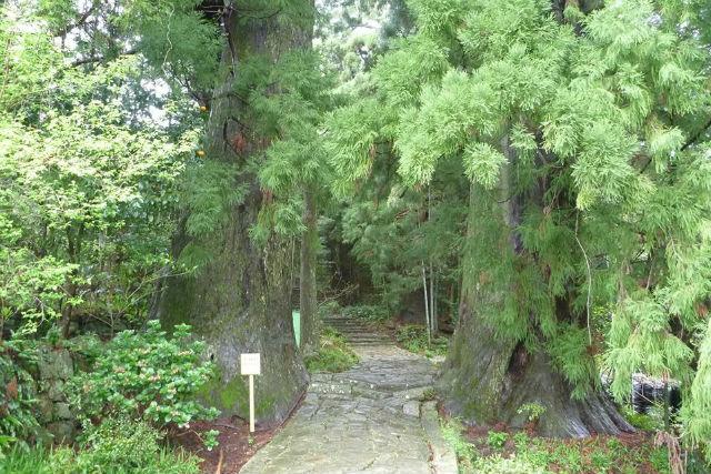 【和歌山・トレッキング】世界遺産の熊野古道をめぐろう!古道歩き・バスコース(紀伊田辺駅発・3日間)